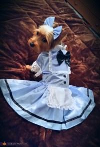 Alice in Wonderland Dog's Costume