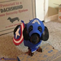 Captain America Dog Halloween Costume