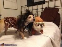 Caveman and Dinosaur Dog Costumes - Photo 2/3