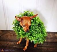 Chia Pet Dog Costume - Photo 3/3
