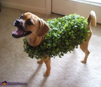 DIY Chia Pet Costume for Dogs