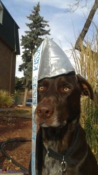 Chocolate Hershey Kiss Dog Costume - Photo 2/2