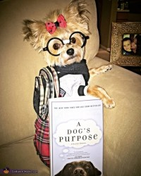 Cutest Nerd Ever Dog Costume - Photo 2/4