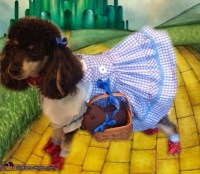 Wizard of Oz Dorothy Dog Costume - Photo 2/3