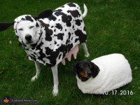 Cow and Sheep Dog Costumes