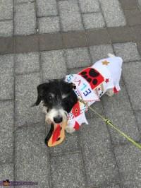 Elvis Dog Costume - Photo 4/8