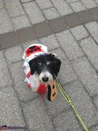 Elvis Dog Costume - Photo 7/8