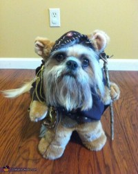 Ewok Dogs Costume