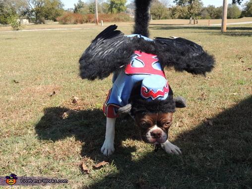 Flying Monkey Dog Costume