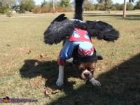 Flying Monkey Dog Costume - Photo 3/3