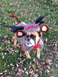 Flying Monkey Dog Costume DIY
