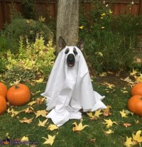 Friendly Ghost Dog Costume