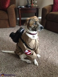 Ghostbusters Dog Costumes - Photo 3/3