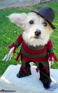 A Nightmare on Elm Street Freddy Krueger Costume for Dogs