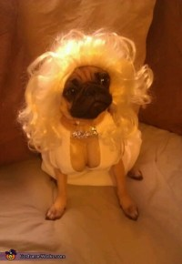 Marilyn Monroe Costume Idea for Dogs - Photo 3/3