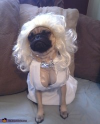 Marilyn Monroe Costume Idea for Dogs - Photo 2/3