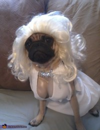 Marilyn Monroe Costume Idea for Dogs