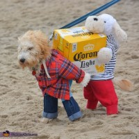Dogs Carrying a Box of Corona Beer Costume