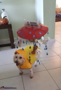 It's Raining Cats and Dogs Halloween Costume