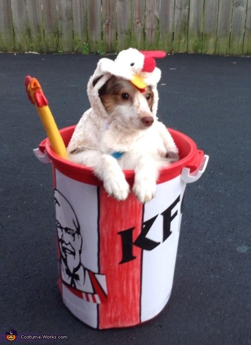 Cute Corgi Puppies Wallpaper Kfc Chicken Bucket Diy Costume Ideas For Dogs