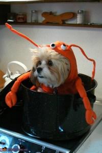 Lobster Dog Costume