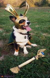 The Avengers Loki Dog Costume