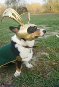The Avengers Loki Dog Costume - Photo 2/2