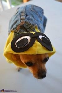 Minion Dog Costume