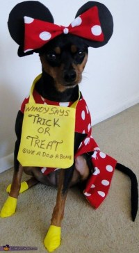 Minnie Mouse - Homemade Costume for Dogs