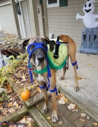 Ninja Turtle Dogs Halloween Costume