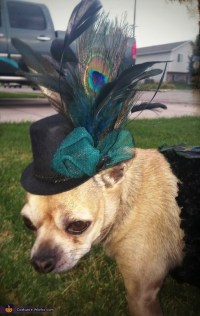 DIY Peacock Dog Costume - Photo 5/5