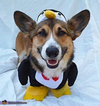 Penguin Dog's Costume