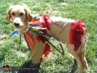 Little Indian costume for dogs