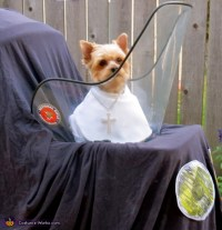 DIY Pope Dog Costume