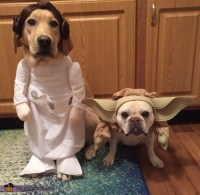 Yoda Dog Costume | www.pixshark.com - Images Galleries ...