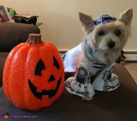 R2D2 Dog Costume - Photo 2/2