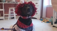 Raggedy Ann Dog Costume - Photo 2/2