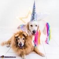 Sunshine the Unicorn and Lion Sidekick Dogs Costume