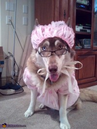 The Big Bad Wolf Costume Idea for Dogs
