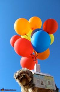 UP Movie Dog Costume
