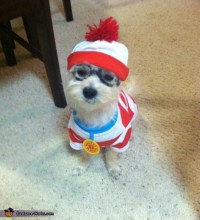 Waldo's Dog Woof Costume - Photo 5/5