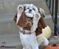 Ewok Costume for Dogs