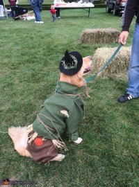 Wizard of Oz Scarecrow Dog Costume