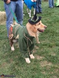 Wizard of Oz Scarecrow Dog Costume - Photo 4/4