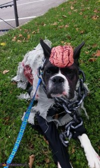 Zombie Dog Costume - Photo 3/5