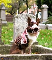 Zombie Dog Costume DIY