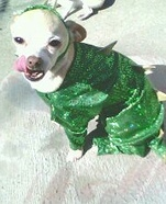 Homemade Costumes for Pets - Costume Works (page 15/25)