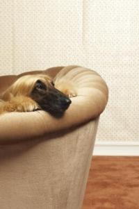 How to Make Dog Repellent for Furniture   Home Guides   SF ...