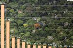 Palm Oil Rainforest Rescue