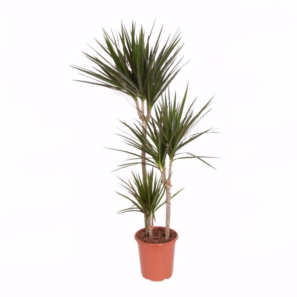 palmier artificiel ikea beautiful plante aquatique ikea gnial les meilleures images du tableau. Black Bedroom Furniture Sets. Home Design Ideas